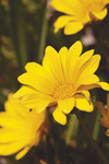 kwiaty 23104.jpg